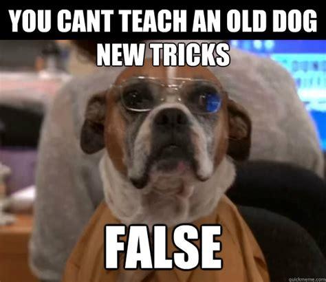 New Dog Meme - un holly wood the cinema realm