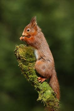 well the squirrels are back commercial script squirrel quot well i have a coconut house but the weather