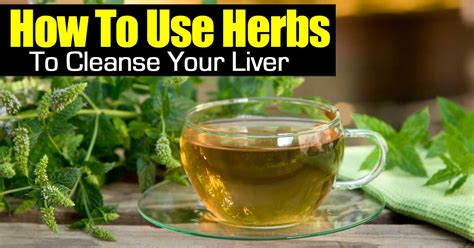 Herbs To Detox Liver by How To Use Herbs To Cleanse Your Liver