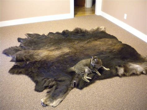 Moose Hide Rug Moose Rug Fireside Taxidermy
