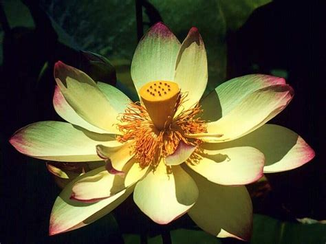 imagenes gratis flores exoticas flores ex 243 ticas wallpapers taringa