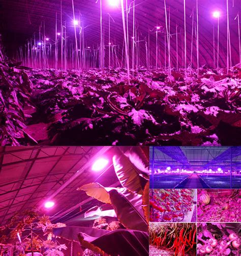 led grow lights for orchids best supplier bp600 680 watt orchid led light plant grow