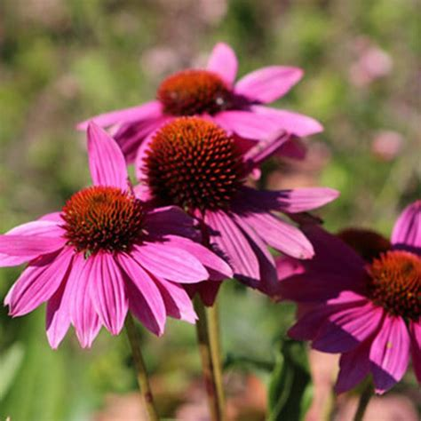 garden flowers types 151 types of flowers common in the u s their