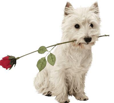 imagenes png animales perro png