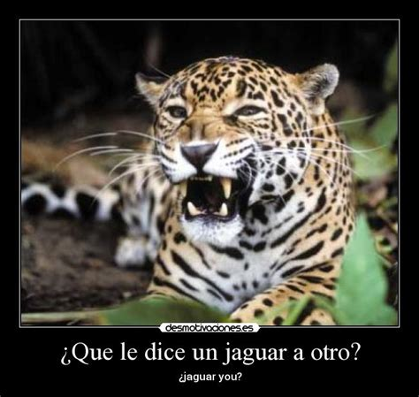 imagenes animadas de un jaguar 191 que le dice un jaguar a otro desmotivaciones