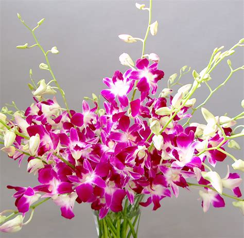 picture of orchid flower beautiful flowers