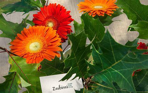 fiori recisi nomi fiori recisi linguaggio dei fiori zubini