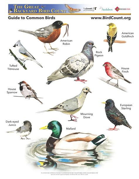 types of backyard birds adirondack family time four season of activities 2 10