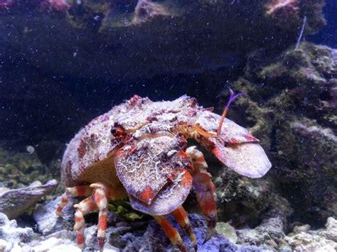baby shark in mandarin bulldozer lobster says quot hello quot saltwater pinterest
