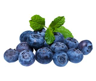 can dogs eat berries can dogs eat blueberries friendly food