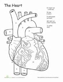 anatomy coloring pages awesome anatomy if i only had a worksheet