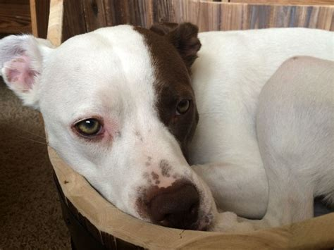 tj maxx dog beds how to make a wine barrel dog bed lola the pitty