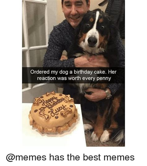 Birthday Cake Dog Meme - ordered my dog a birthday cake her reaction was worth