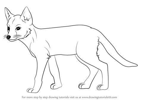 swift fox coloring page learn how to draw a swift fox wild animals step by step