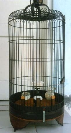 Pakan Alternatif Branjangan tips memilih dan merawat sangkar burung branjangan om kicau