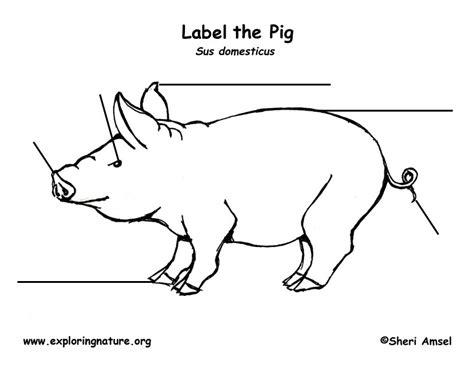 pig diagram pig diagram labeled wiring diagram