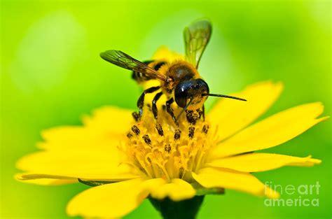 Yellow Bee pollinator poster thinglink