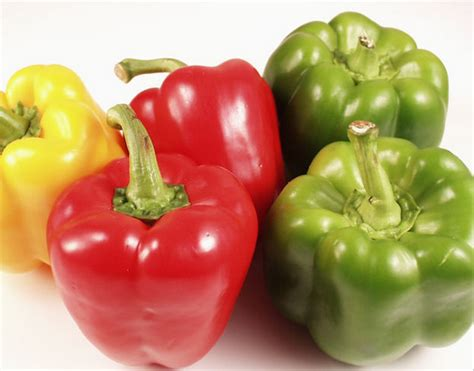 can dogs eat green peppers can dogs eat bell peppers green or yellow