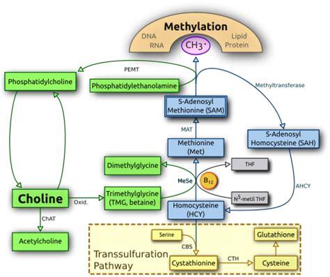 How To Interpret Detox Profile Genetic Genie by Genetic Genie Methylation And Detox Analysis From