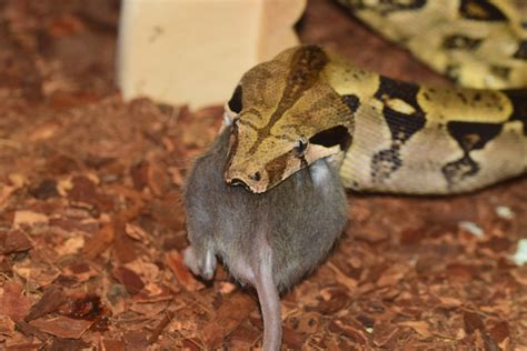 how to get rid of snakes remove these pests in your home