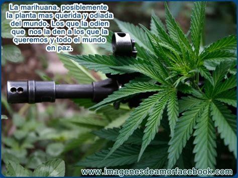 imagenes perronas de mota im 225 genes de marihuana con frase para facebook im 225 genes