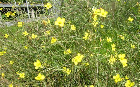 Große Pflanzen Kaufen 83 by Rucola Pflanzen Kaufen Pflanzen F 252 R Nassen Boden