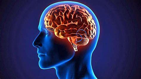 imagenes de el cerebro humano webquest el cerebro humano