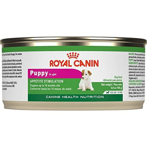royal canin canned food best food for dachshunds 9 vet recommended brands