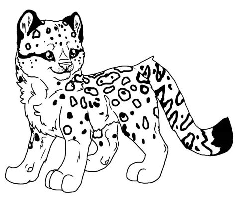Snow Leopard Coloring Pages leopard coloring pages