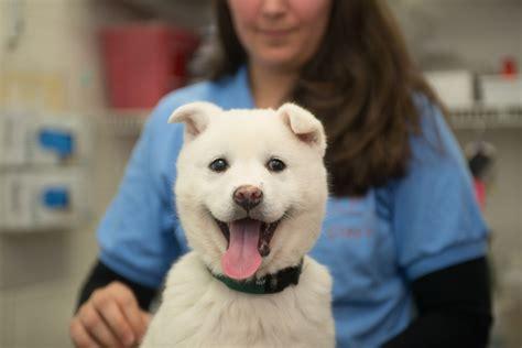 korean dogs korea trade survivors settle in forever homes 183 a humane nation
