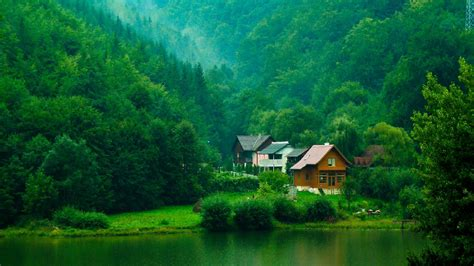 wallpaper pemandangan alam hijau hutan wallpaper pohon semak rumah sungai hijau