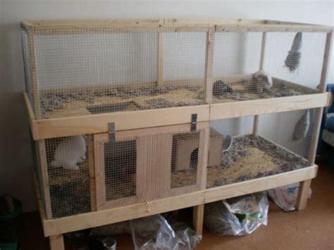 kaninchengehege innen innengehe selbst bauen viele fragen kaninchen