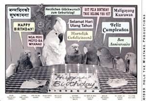 parrot birthday postcard