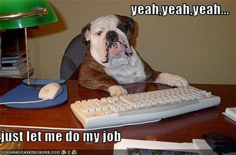 yeahyeahyeah      job cheezburger funny memes funny pictures