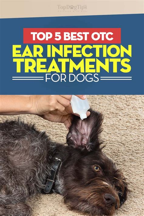 ear infection medication the counter top 5 best ear infection treatments the counter couture country