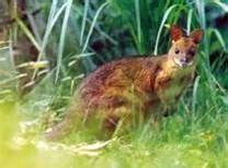 Floor Animals by Rainforest Floor Animals Images Rainforest