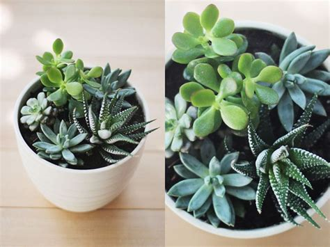best indoor plants for your sad and lonely life broke 380 best images about mini fairy gnome gardens on