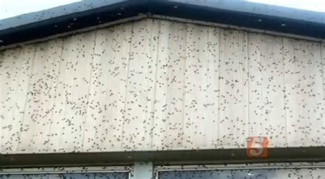 ladybugs swarming houses in tennessee alabama
