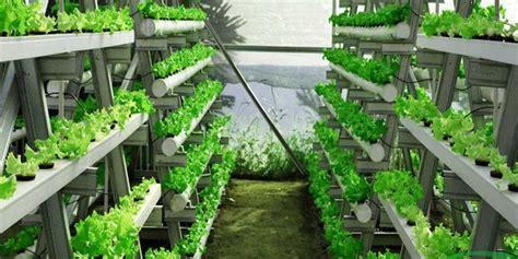 mengenal sistem hidroponik bertanam hidroponik cara menanam hidroponik untuk pemula merdeka com
