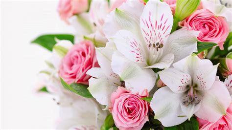 imagenes de rosas blancas y rosadas orqu 237 deas blancas y rosas fotos e im 225 genes en fotoblog x