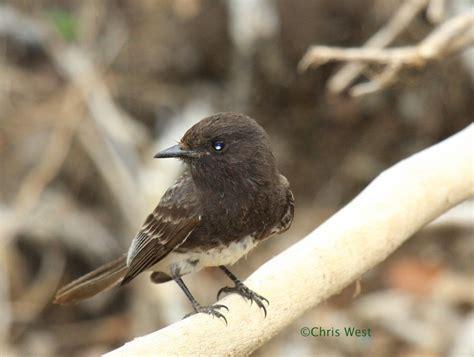 backyard birds of southern california pin by chris west on best birds of southern california