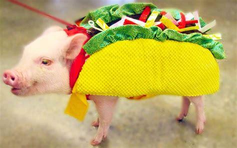 Cmon Ladiesbe Pigs by Animal Photos Of The Week Telegraph