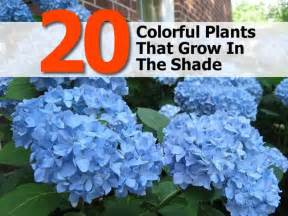 20 colorful plants that grow in the shade