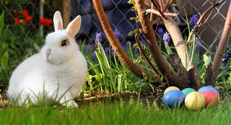 history of easter bunny what is easter understand the meaning history