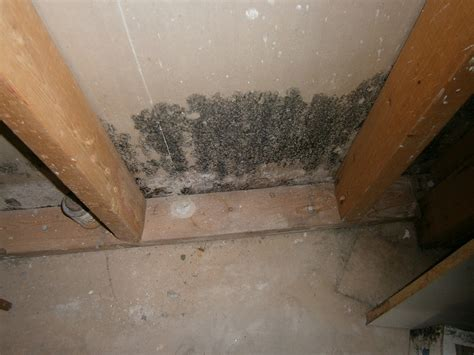 mold in basement mold removal costs