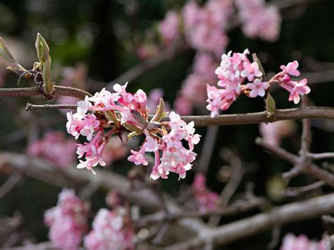winter flowering plants 10 of the best life and style the guardian