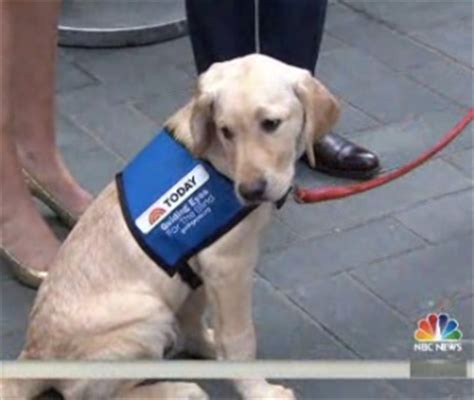 today show puppy pet scoop dieting dachshund reveals svelte look pandas get privacy for mating season
