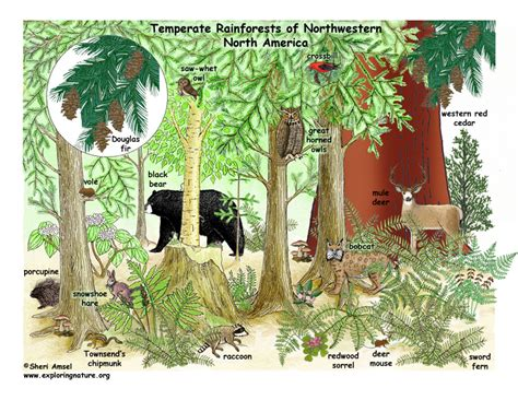 woodland forest plants and trees temperate rainforests