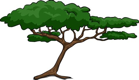 tree images shrub clipart acacia tree pencil and in color shrub