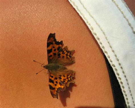 3d tattoo butterfly designs some beautiful 3d butterfly tattoos butterfly beautiful